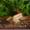 Аквариумные рыбки Барбусы #901516