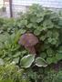 украсьте свой сад