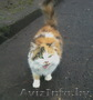 Кошка ждет добрых хозяев