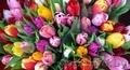 Тюльпаны, оптом , в розницу